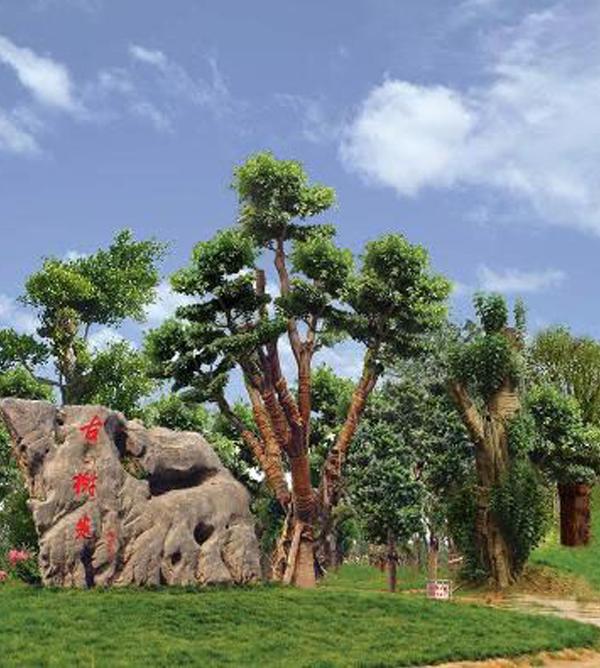 惠济区古树苑